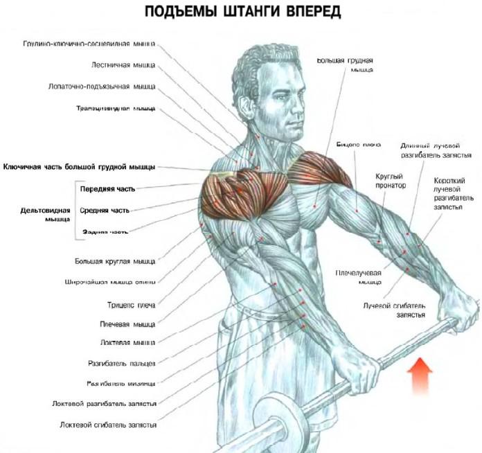 Как сделать чтобы плечи были широкими