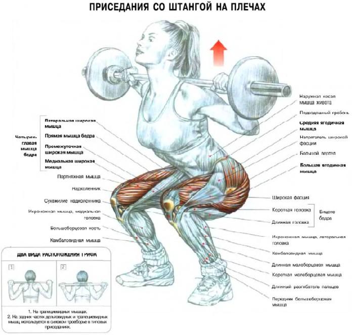 красивые мышцы: упражнения на